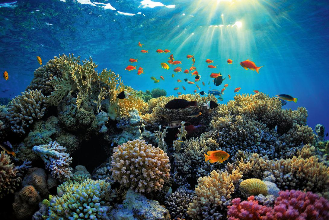 csm-colorful-reef-istock-a92bd94296-r6.jpg
