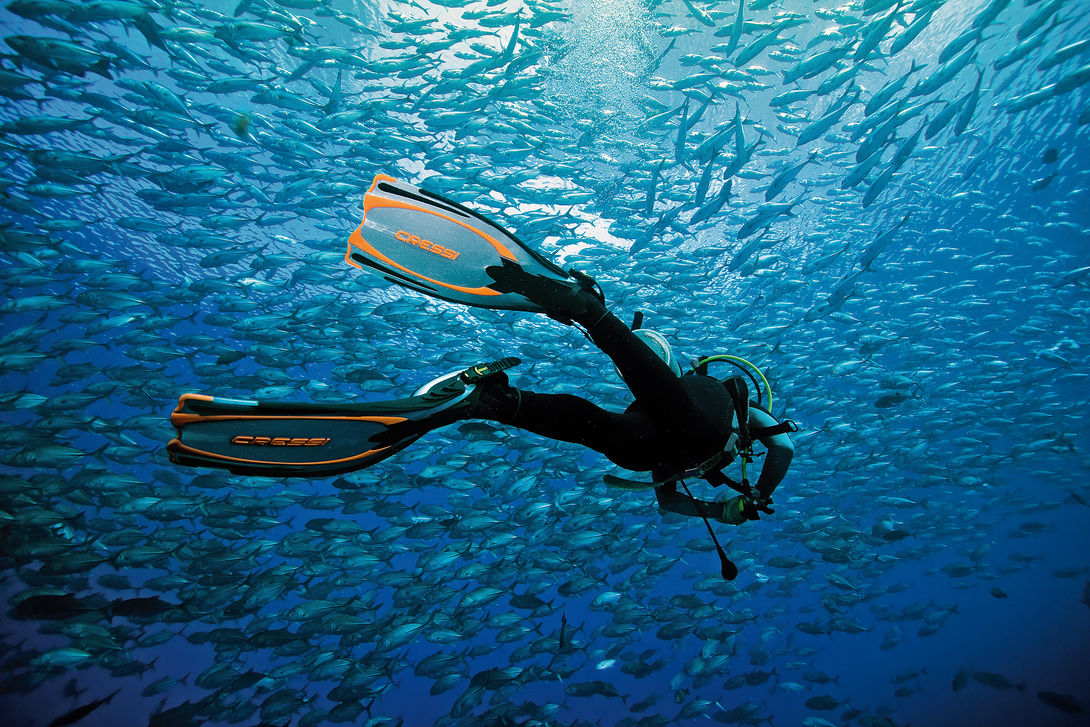 csm-diver-swimming-away-with-fish-cressi-f9ddeac00c-v2.jpg