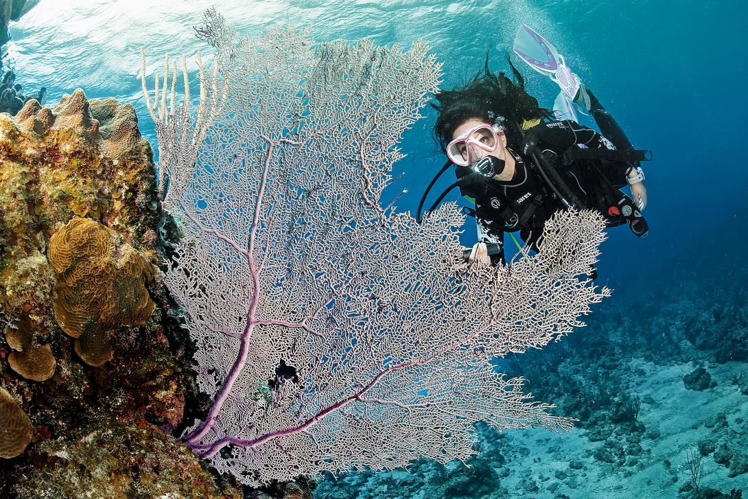 csm-female-with-white-sea-fan-fc00d93093-o3.jpg